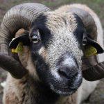 Schnelle Hilfe für Tiere auf dem Gnadenhof Dahn<br /><h5>Daniel-Theysohn-Stiftung | Pressemeldung vom 27. Okt. 2017 </h5>