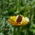Erfreuliche erste Ergebnisse für Biodiversitäts-Modellprojekt<br /><h5>Daniel-Theysohn-Stiftung | Pressemeldung vom 18. Jul. 2018 </h5>